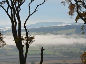Fog at Linley Hill - 2014