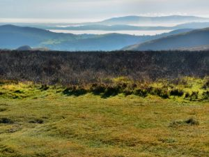 Fog at Long Mynd - 2014