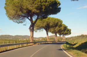 Road at Toscany